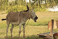 Name: IMG_9179.jpg