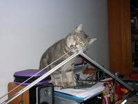 Name: P1140451.jpg