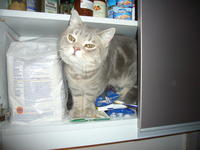 Name: P1140850.jpg