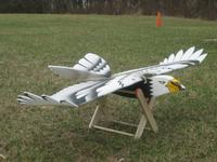 Name: 124_2453.jpg