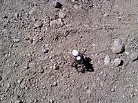 Name: 0829091043-00.jpg