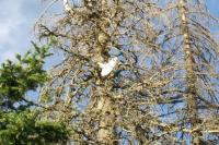 Name: flying_mtHood_small.jpg
