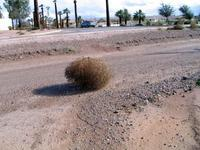 Name: tumbleweeds01.jpg