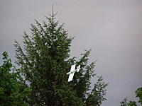 Name: P5220120.jpg