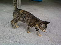Name: Photo533.jpg