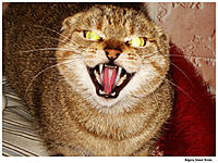 Name: evil-cat.jpg