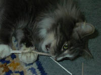 Name: Baldrick likes Balsa.jpg