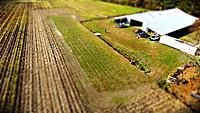 Name: tilt shift field.jpg