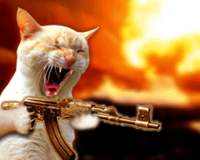 Name: Cat_Attack.bmp