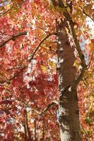 Name: trees02s.jpg