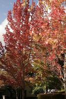 Name: trees03s.jpg