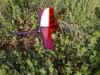 Name: IMG-20130222-00320.jpg