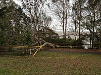Name: Moora park tree 1.jpg