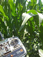 Name: Stryker Corn.jpg