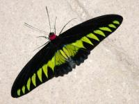 Name: 00 34744215_P1040408.jpg