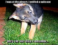 Name: puppy-sniffed-suitcase.jpg