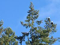 Name: Eagles closeup.jpg