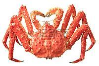Name: king-crab 01.jpg Views: 21 Size: 55.7 KB Description: