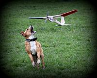 Name: FreeAir Easy.jpg