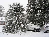 Name: Snow_12-2009.jpg