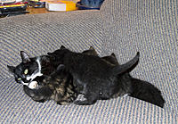 Name: CRW_0057.jpg