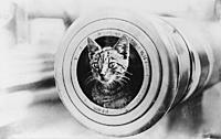 Name: 800px-A_cat_on_HMAS_Encounter.jpg