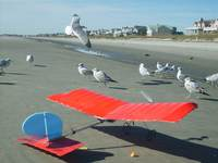 Name: SD530585.jpg