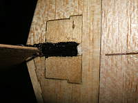 Name: dl-50 005.jpg