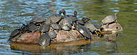Name: 2011.02.06.0113.jpg