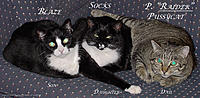Name: Cats.001A..jpg