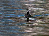 Name: 2012-10-28_0481.jpg