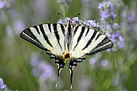 Name: _DSC0093.jpg
