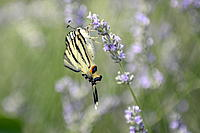 Name: _DSC0101.jpg