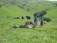 Name: IMG_1337.jpg