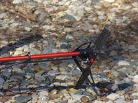 Name: p1030727.jpg