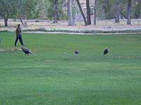 Name: CIMG0569.jpg
