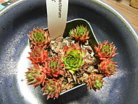 Name: DSCN4515.jpg