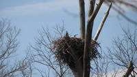 Name: Eagle Nest 3-21-09 #1.jpg