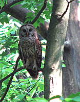 Name: Tippecanoe St Park, 5-30-10, crp.jpg