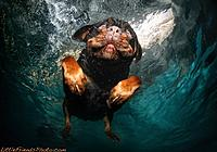 Name: under-water-dog13-600x420.jpg