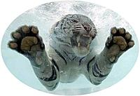 Name: Tiger 2.jpg
