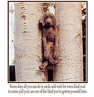 Name: Dogintree.jpeg