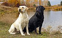 Name: two-dogs-near-the-lake.jpg