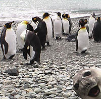 Name: seal.jpg