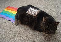 Name: nyan cat.jpg