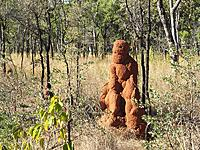 Name: termite man2 mataranka.jpg