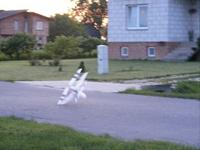 Name: Paul PL3.jpg