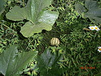Name: P8230117.jpg