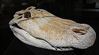 Name: 182.jpg