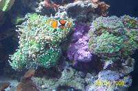 Name: thumb-100_3233.jpg